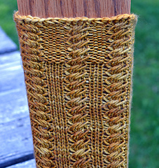 Fern_close_front_small