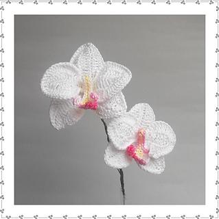 Free Crochet Pattern Orchidee : Ravelry: The Book of Crochet Flowers 2 - patterns