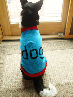 Luna_dog_sweater_11-10__2___768x1024__small2