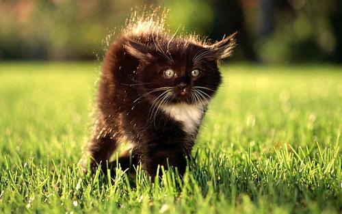 Black-kitten-in-grass-field-pics__1__medium