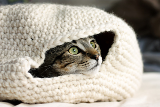 Cat_oven_small2