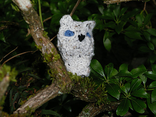 Oisin_owl_small2