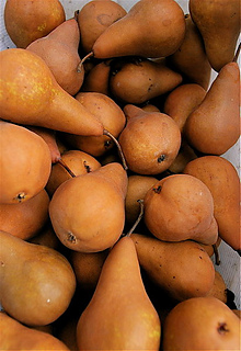 412px-boscpears_small2