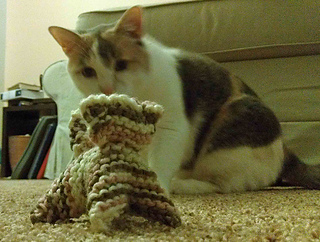 Imag5904cattoyrav_small2