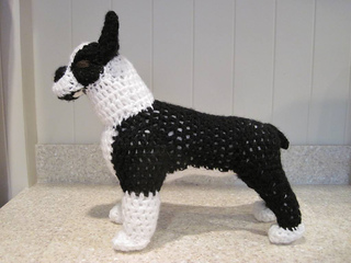 Boston_terrier_side_small2