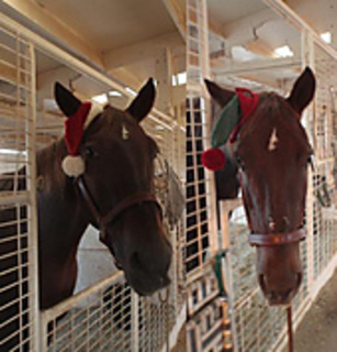Santa_hat_and_elf_hat_small2