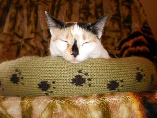 Large_dog_cat_bed_shiri_designs_02_11_chin_small2