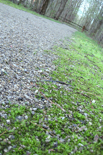 Mossy_path_small2