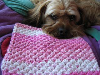 Knitting_2009_06_06_1108_small2