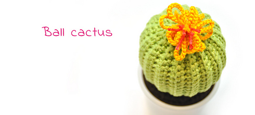 En-ball-cactus_medium