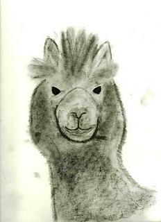 Eco-llama_small2