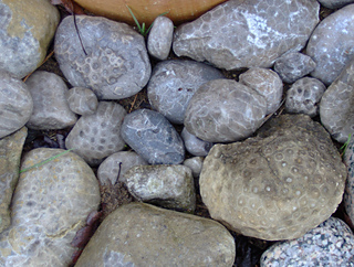 Petoskey_stones_small2