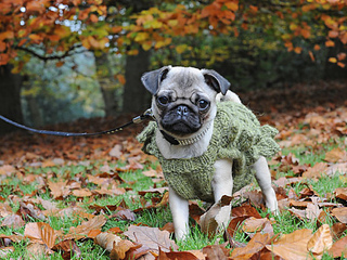 Charity_book_woodland_shoot_glady_the_pug_shot__2__small2