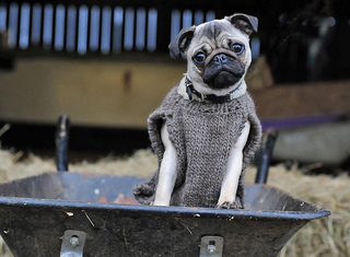 Glady_s_stable_shoot_dog_coat_small2