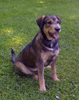 Joydog_copy_small2