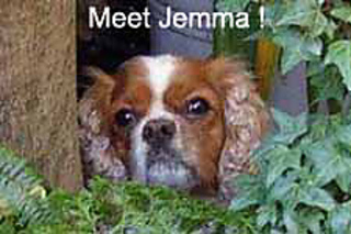 Jemmadog_small2
