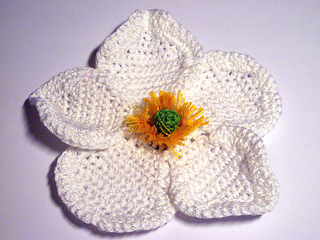 Whiteanemone_pattern1_small2