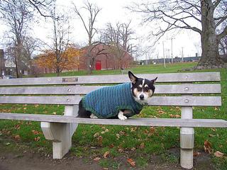Rileysweater2_small2