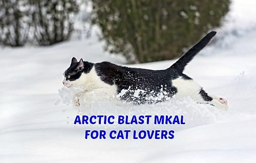 Arctic_blast_mkal_for_cat_lovers_medium