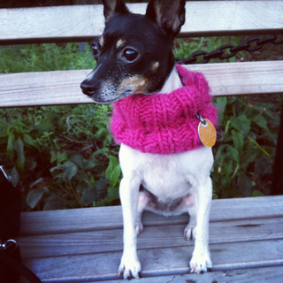 Dogcowlknittedmille_small2
