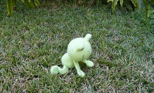 Froggy_4_medium