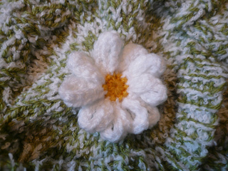 Daisy_on_cosy_small2