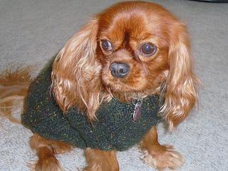 Beaussweater_007_small2