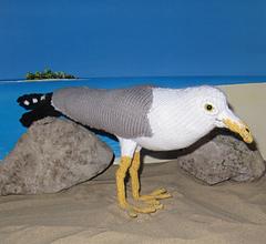 My_pet_seagull3_small