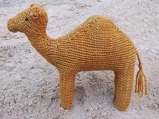 Camel_humphrey_small2