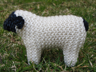 Suffolk_sheep1_small2
