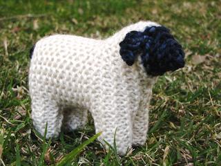 Sheep3_small2