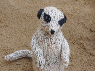 Meerkat_photos_023_small2