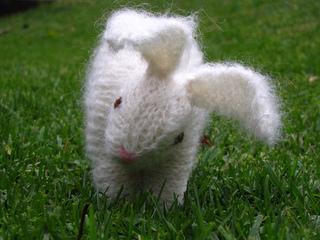 Rabbit3_small2