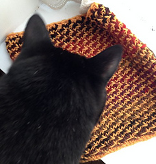 Yellowcowl2_small