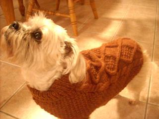 Aran_dog_sweater_small2