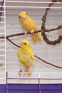 Canary1_small2