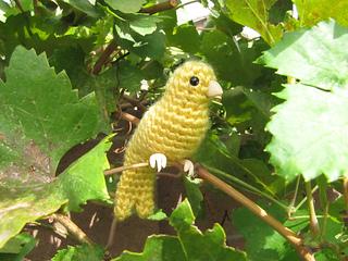 Canary3_small2