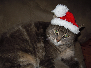Christmas_kitties_2012_012_small2