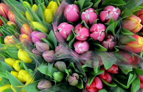 Spring-flowers-3-940x609_medium