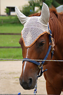 Free Crochet Horse Fly Mask Pattern : Ravelry: Ohrengarn f?r Pferde/fly bonnet for horses ...