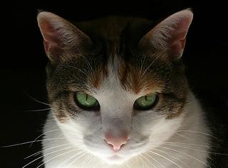 Bridget-stare_small2