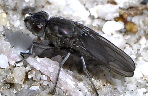 Flybrine22211c_medium