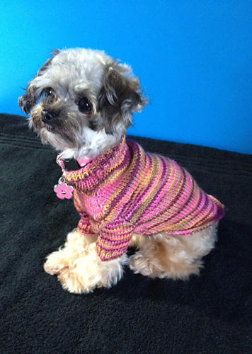 Douglas Dog Knitting Pattern : 1000+ images about Hand Knitted Dog Sweaters on Pinterest Dog sweaters, Cat...