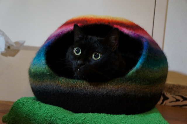 Ravelry: Cat Cocoon Pattern By Yellow Thread Knits