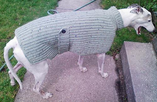 Ravelry Knit Look Greyhound Sweater Pattern By Lenora Conlon