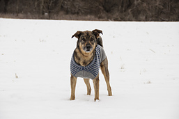 Dogsweater_catalog_r1_01_small_best_fit