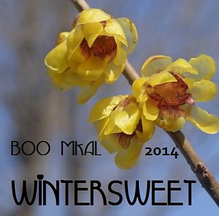 Wintersweet_mkal_small2