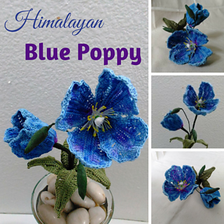 Ravelry Himalayan Blue Poppy Pattern By Leticia Lebron