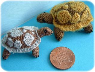 Tortoisessh_small2