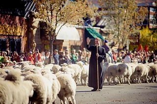 Trailing-of-the-sheep-11_25255b5_25255d_small2